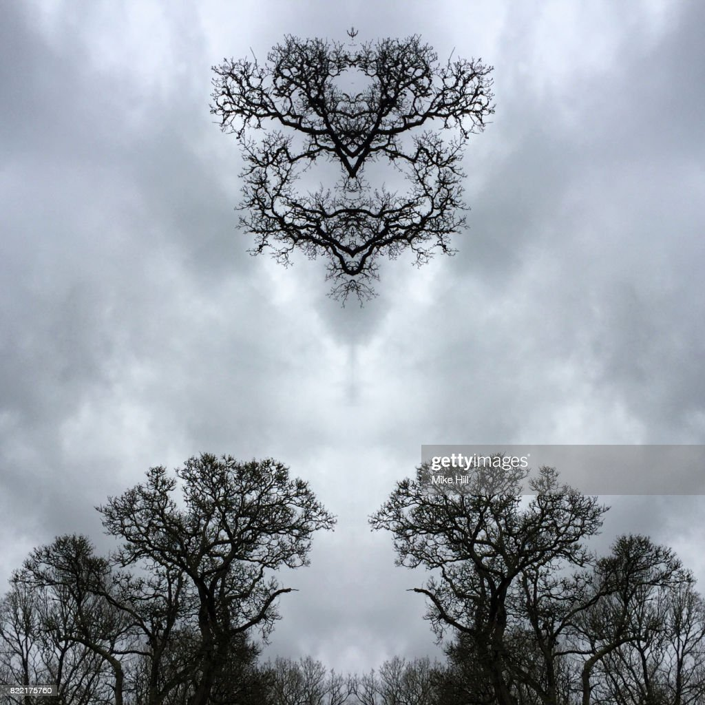 Kaleidoscopic Image of Winter Tree branches : Stock Photo