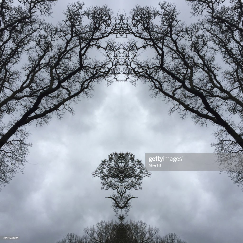 Kaleidoscopic Image of Winter Tree branches : Stock Photo