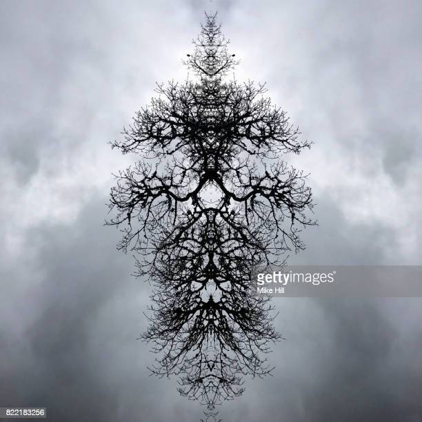 Kaleidoscopic Image of Winter Tree branches