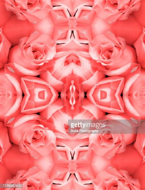 kaleidoscopic pattern of roses (image manipulation with living coral pantone, color of the year 2019) - 2010 2019 stock pictures, royalty-free photos & images