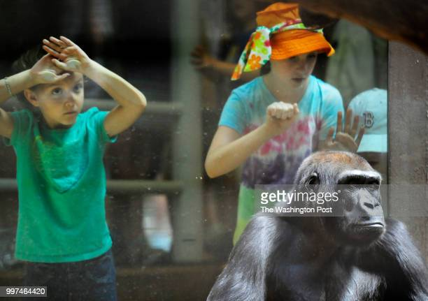 Kali Bateman left of Lakeridge VA and Maggie Bopp of State College PA stand close to a glass partition near a western lowland gorilla at the...