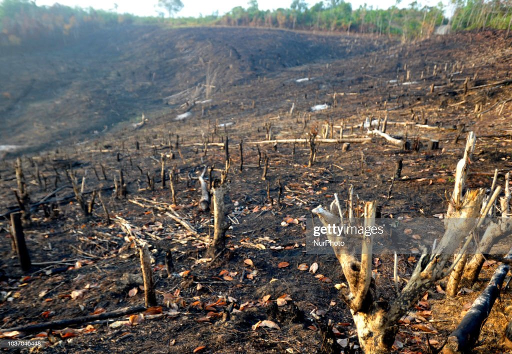 Land Burning Damaged Forests In Kalimantan
