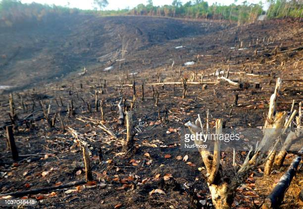 Kalimantan Barat Indonesia on September 21 2018 Used Land burning occurred in West Kalimantan on September 19 2018 West Kalimantan Province continues...