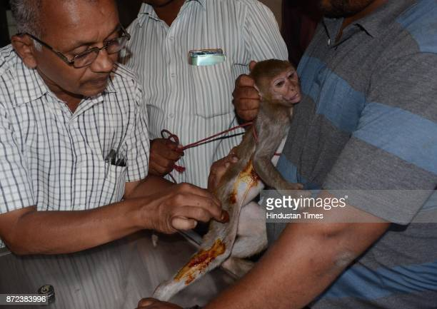 Kalyan Forest dept and animal lover rescued an injured monkey from Thakurli substation on November 9 2017 in Mumbai India Forest Officer Sameer...