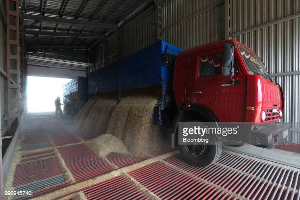 A Kamaz PJSC truck unloads wheat grain during the summer wheat harvest on a farm operated by Ros Agro Plc in Kazinka village outside Belgorod Russia...