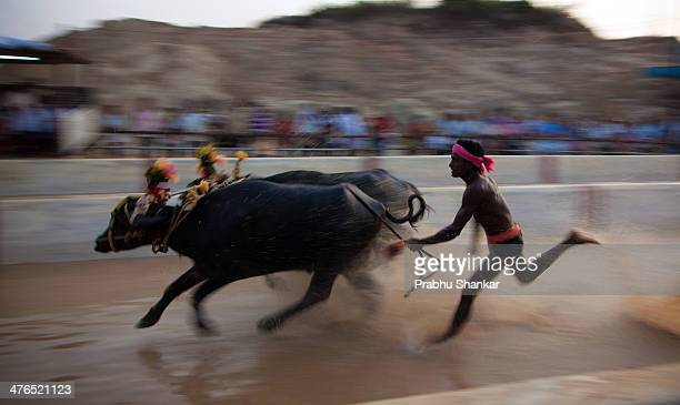 CONTENT] Kambala is an annual Buffalo Race held traditionally in coastal KarnatakaIndia A pair of buffalos are made to run in a muddy water field and...