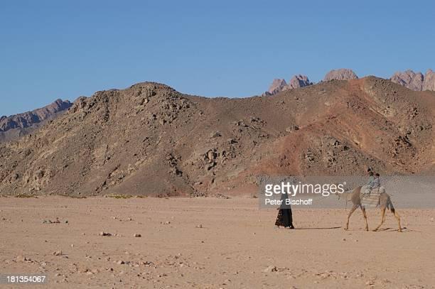 Kamel in der Wüste bei Hurghada Ägypten Afrika Nomaden Berge Tier Wüstentour ProdNr 523/2006 Reise