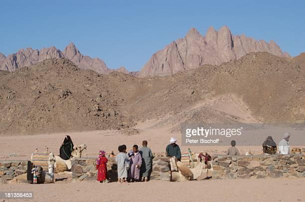 Kamele in der Wüste bei Hurghada Ägypten Afrika Nomaden Berge Tier Tiere Wüstentour ProdNr 523/2006 Reise