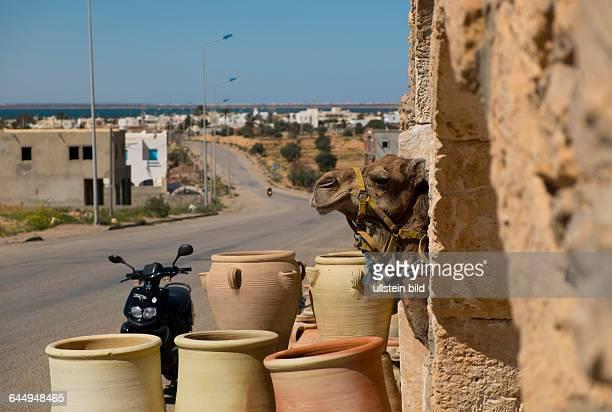 Kamele stehen in einer Töpferwerkstatt in Guellala auf der tunesischen Insel Djerba aufgenommen am