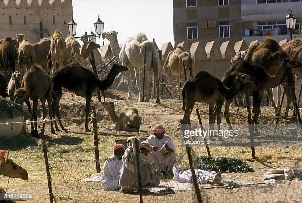 Kamelmarkt in Dubai 1996