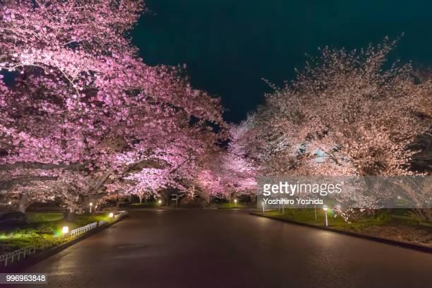 kamigyō-ku,japan - in fiore foto e immagini stock