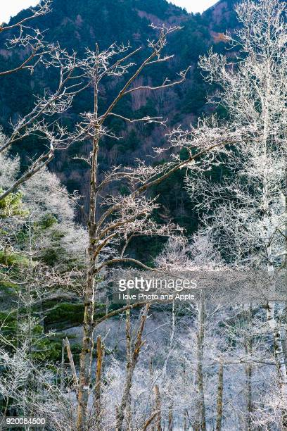 Kamikochi scenery in late autumn, frost Tashiro-ike