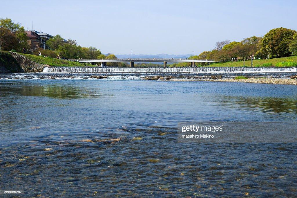 Kamo River : Stock Photo
