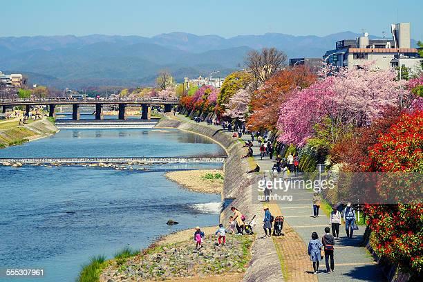 kamogawa in spring - fluss kamo stock-fotos und bilder