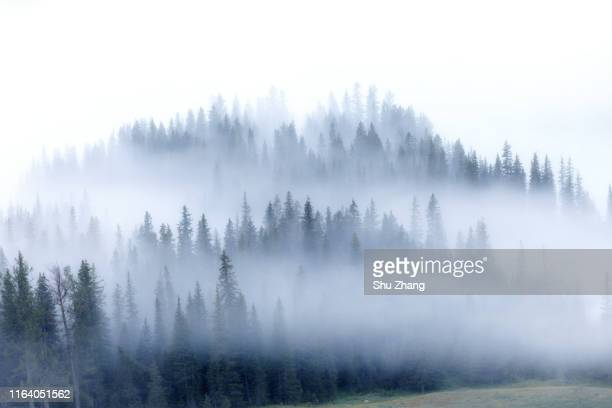 kanas morning fog - forest stock pictures, royalty-free photos & images
