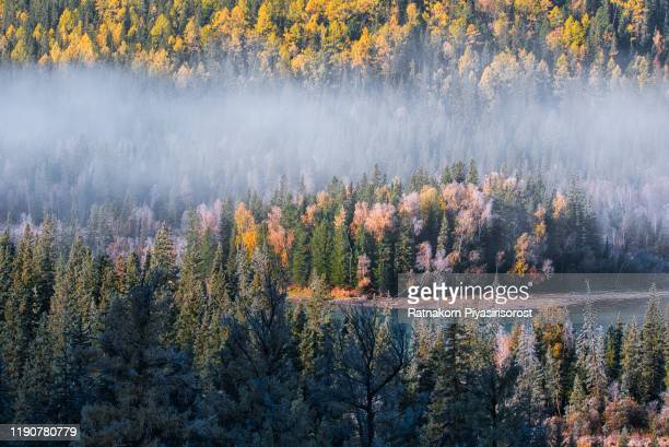 kanas national park, landscape in autumn, xinjiang, china - altay xinjiang province china stock pictures, royalty-free photos & images