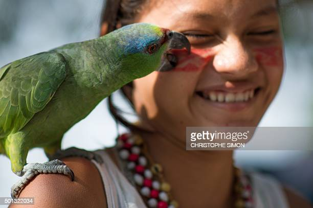 A Kanbeba indigenous girl plays with a parrot in Tres Bocas village on the bank of the Rio Negro in the Amazonia Brazil on December 9 2015 AFP PHOTO...