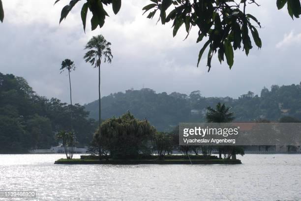 kandy lake (kiri muhuda, 'sea of milk'), sri lanka - argenberg stock pictures, royalty-free photos & images