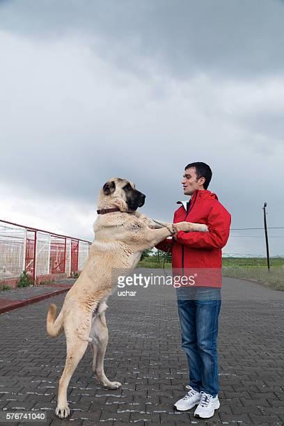 kangal dog and man man - sivas stock pictures, royalty-free photos & images