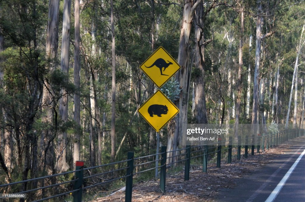 Kangaroo and wombat animals sign on a road : Stock Photo