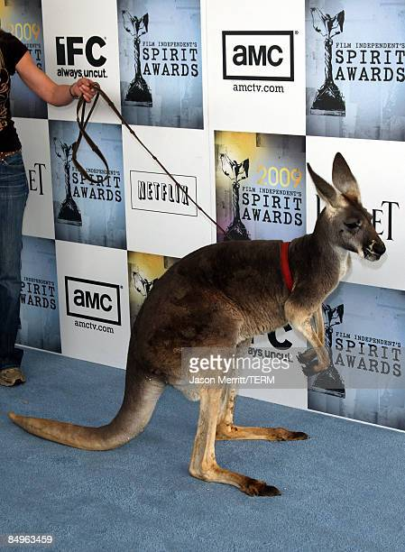A kangaroo arrives at the 24th Annual Film Independent's Spirit Awards held at Santa Monica Beach on February 21 2009 in Santa Monica California