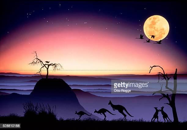 Kangaroo dreamland