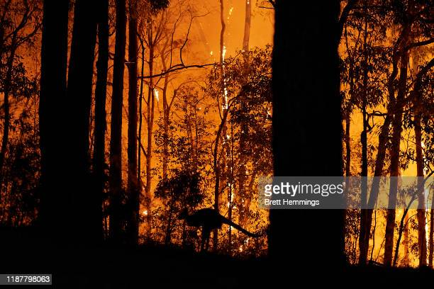 Kangaroo escapes the fire as the fire front approaches a property on November 15, 2019 in Colo Heights, Australia. The warning has been issued for a...