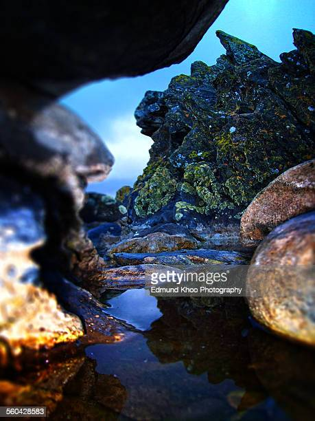 Kangaroo Island Microcosm