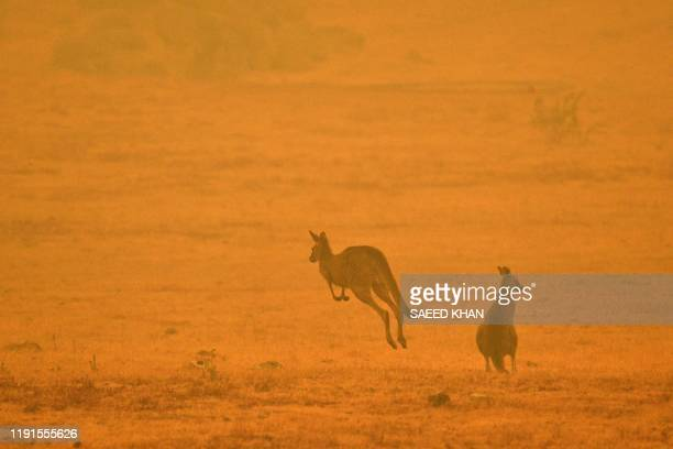 TOPSHOT A kangaroo jumps in a field amidst smoke from a bushfire in Snowy Valley on the outskirts of Cooma on January 4 2020 Up to 3000 military...