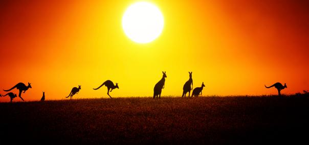 Kangaroo On Sunset 152534135