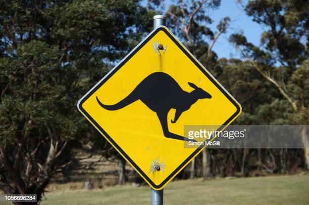 kangaroo road warning sign - animal crossing stock pictures, royalty-free photos & images