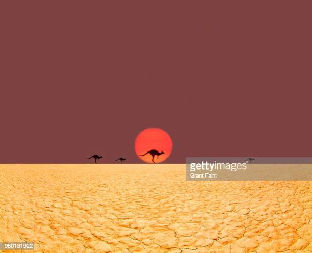 kangaroos running in desert. - alice springs stock pictures, royalty-free photos & images