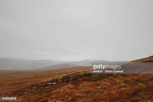 Kangerlussuaq autumn red tundra