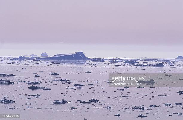 Kangia in Greenland The Ilulissat Ice fjord runs west 40 km from the Greenland ice sheet to Disko Bay close to Ilulissat town At its eastern end is...