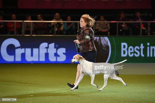 Kanix Chilli the pointer dog and owner Miss H BlackburnBennett who goes on to win 'Reserve Best In Show' enter the ring to be judged for Best In Show...