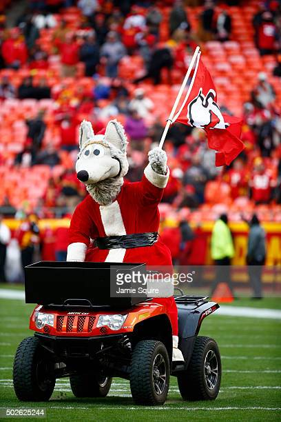 Kansas City Chiefs mascot KC Wolf in Santa Clause attire while riding an atv at Arrowhead Stadium during pre game agains the Cleveland Browns on...