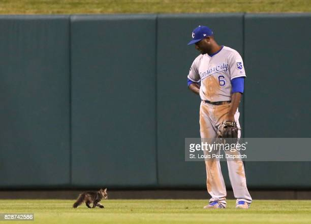 Kansas City Royals center fielder Lorenzo Cain watches a small cat trot past him in the sixth inning during a game against the St Louis Cardinals on...