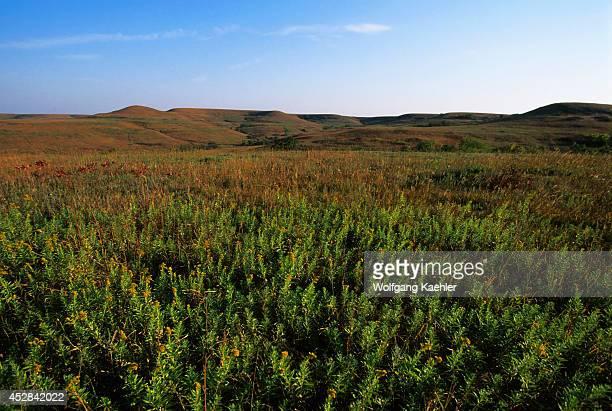 USA Kansas Manhattan Konza Prairie Research Natural Area Landscape