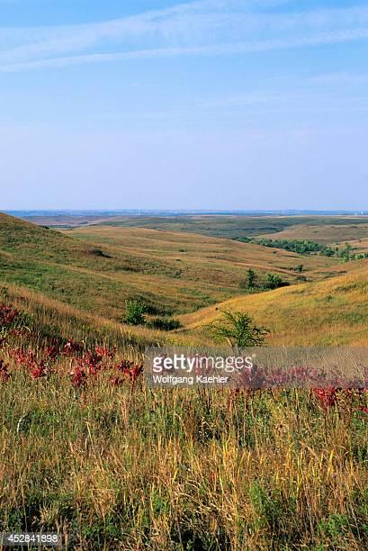 USA Kansas Manhattan Konza Prairie Research Natural Area Landscape With Red Sumac Leaves