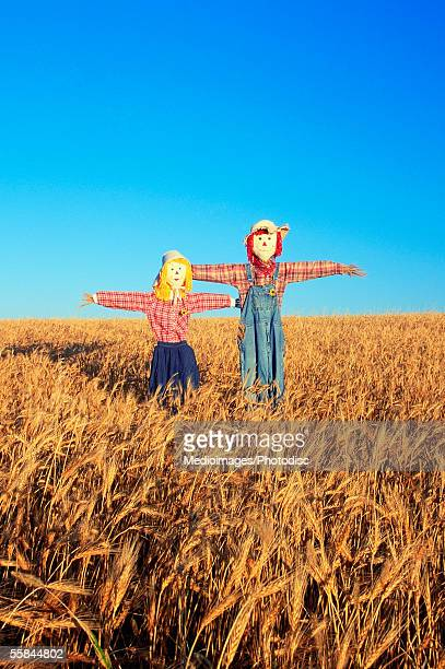 USA, Kansas, Scarecrow in a wheat field