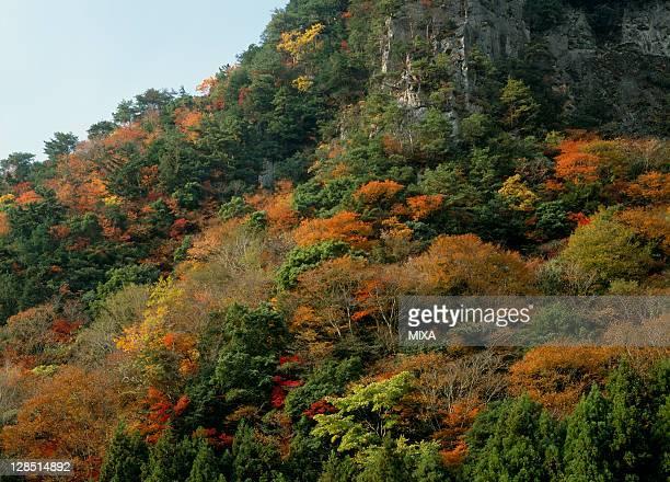 Kaochidani Valley, Nabari, Mie, Japan