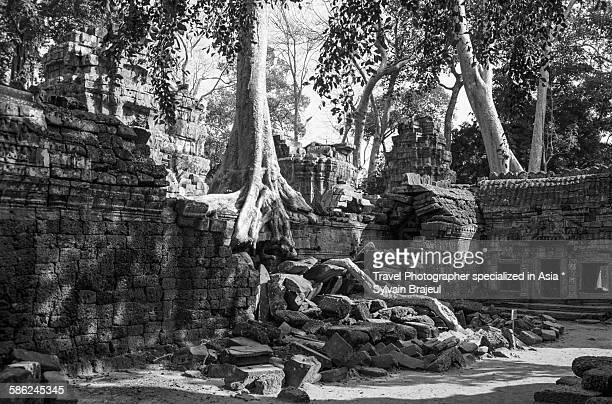 kapok and ruins, ta phrom temple -  brajeul sylvain photos et images de collection