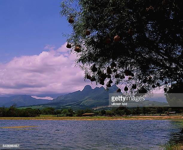 Kap-Provinz : Landschaft an der Weinroutebei Stellenbosch- 1993