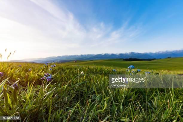 karajun grassland scenery,xinjiang,china - prateria campo foto e immagini stock
