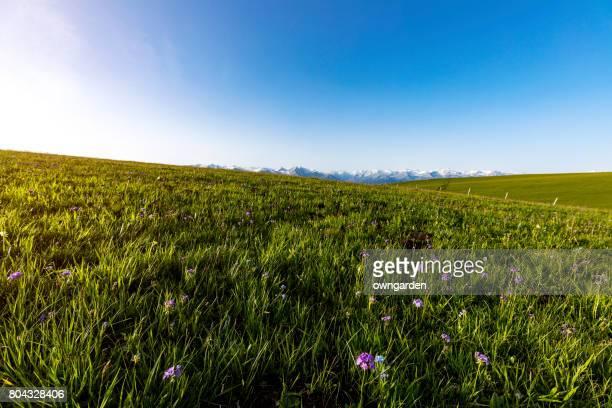 Karajun grassland scenery,xinjiang,china