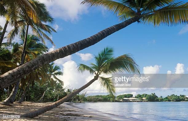 Karibik Kleine Antillen Martinique Sandstrand Mit Palmen 2004