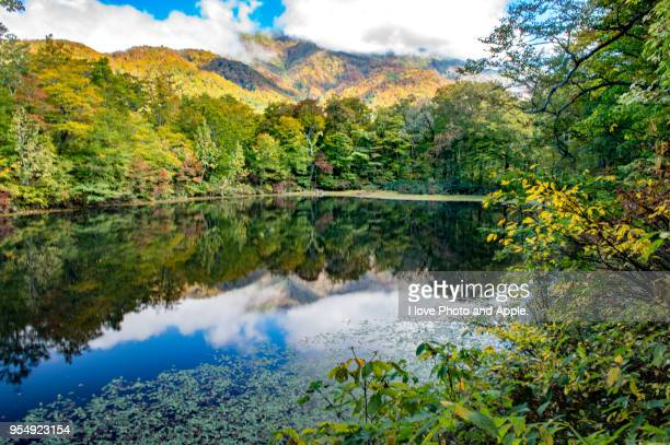 karikomi-ike pond autumn scenery - fukui prefecture stock photos and pictures