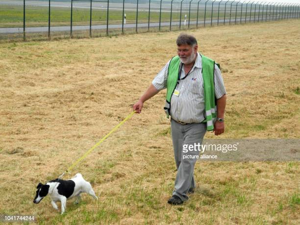 Karl Hahn manager of the apron and bird strike officer at the airport walks over the grounds at the airport in Hahn Germany 24 July 2013 Collisions...