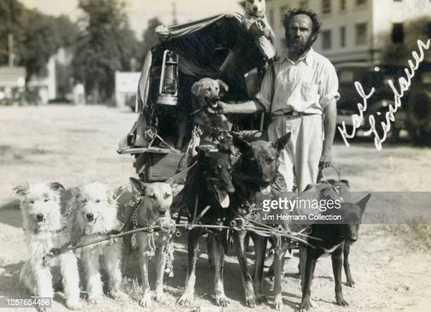 Karl Lindauer poses for a photo with a team of dogs hitched to his wagon, circa 1934.