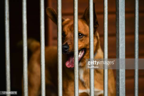Karol an abandoned dog seen in a cage at the Szarikton private hotel for dogs Along with its kennel services the Szarikton provides a 'window of...